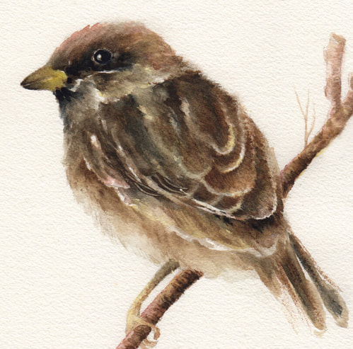 Sparrow watercolor bible art by Caryn Dahm